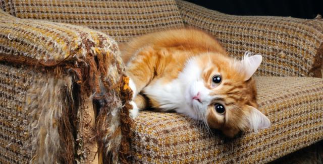 zavřít kočička pic